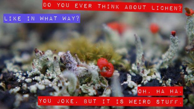 A silly pun about lichen